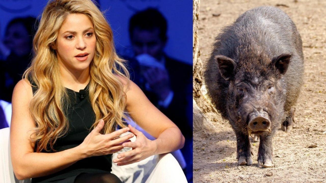 Shakira dice que fue 'atacada' y robada por jabalíes mientras caminaba en el parque de Barcelona con su hijo pequeño